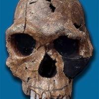 02-1-Homo_habilis-KNM_ER_1813.jpg