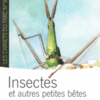 glossaire-insectes-occitan.jpg